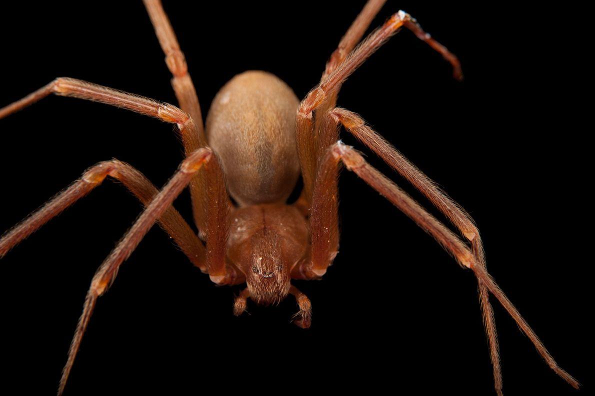 07-creepy-spiders