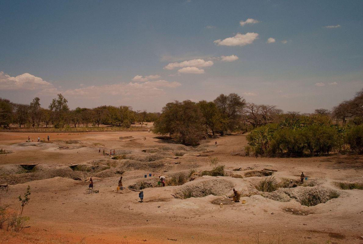 Pozos en el lecho de un río excavados para el ganado en Tanzania también son usados ...