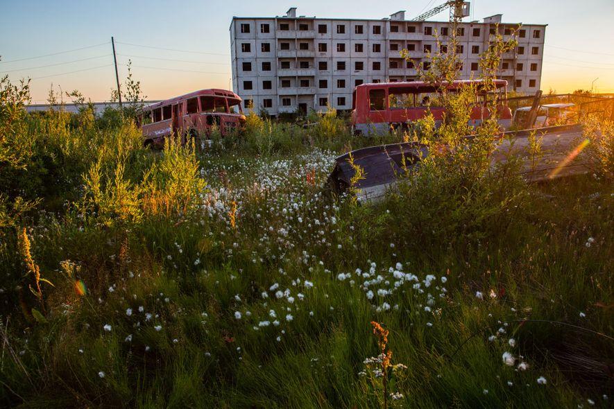 Cola de zorro, chamerion y algodón – tres típicas plantas de verano en Chersky, Rusia. Toda ...