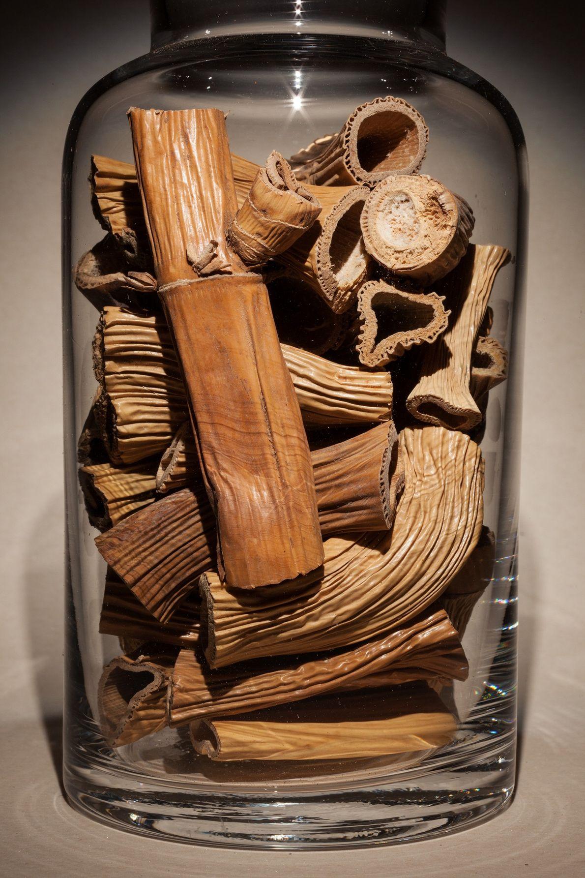 """Nombre común: rizoma de caña Latín: """"Phragmites australis"""" Chino: Lu gen Algunos usos: fiebre, sangre en la orina."""