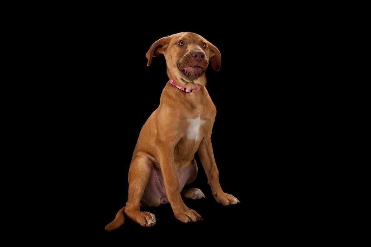 08-galeria-perros