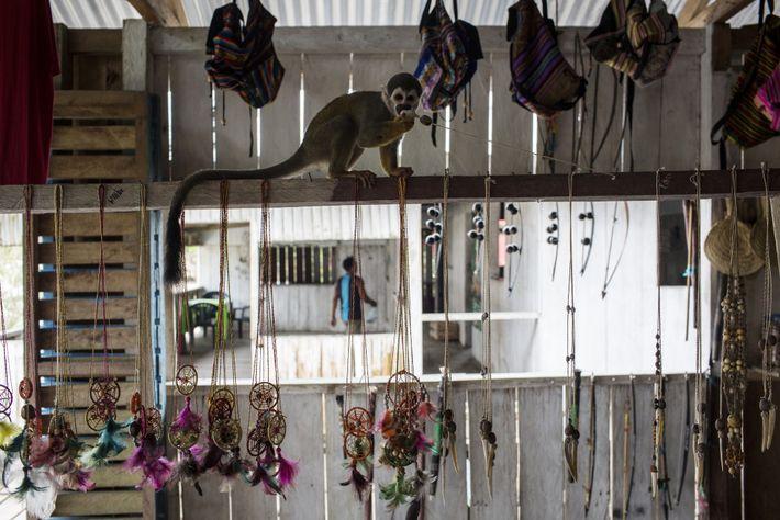 Un mono ardilla juega con un collar en una tienda de Puerto Alegría. Aunque los animales ...