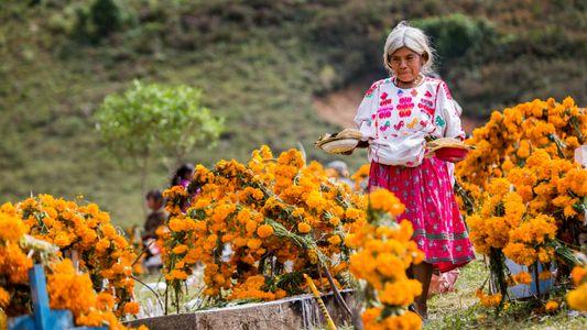 #NGXplorers: Día de los Muertos por Armando Vega I