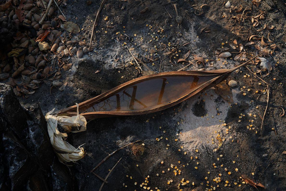El equipo de rescate deja agua y semillas en cocos para los animales que sobreviven. Cuando ...
