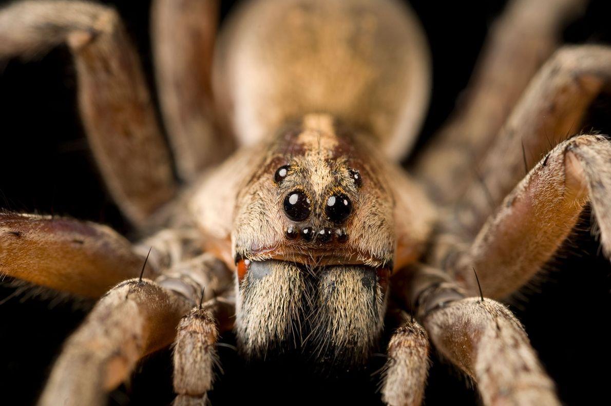 09-creepy-spiders