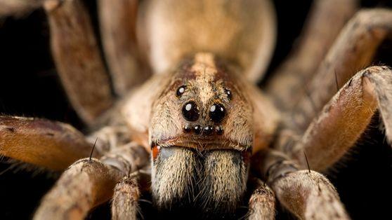 10 hermosas fotos que te harán amar a las arañas