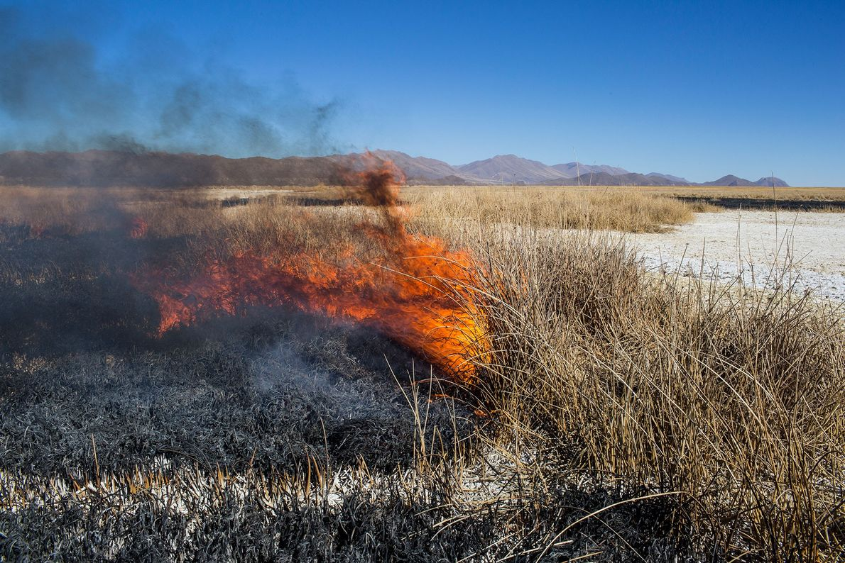 Imagen de un campo boliviano despejado por medio de la quema. Del artículo de la edición ...