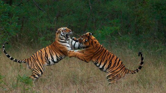 Unos hermanos casi adultos juegan para perfeccionar sus habilidades de lucha.