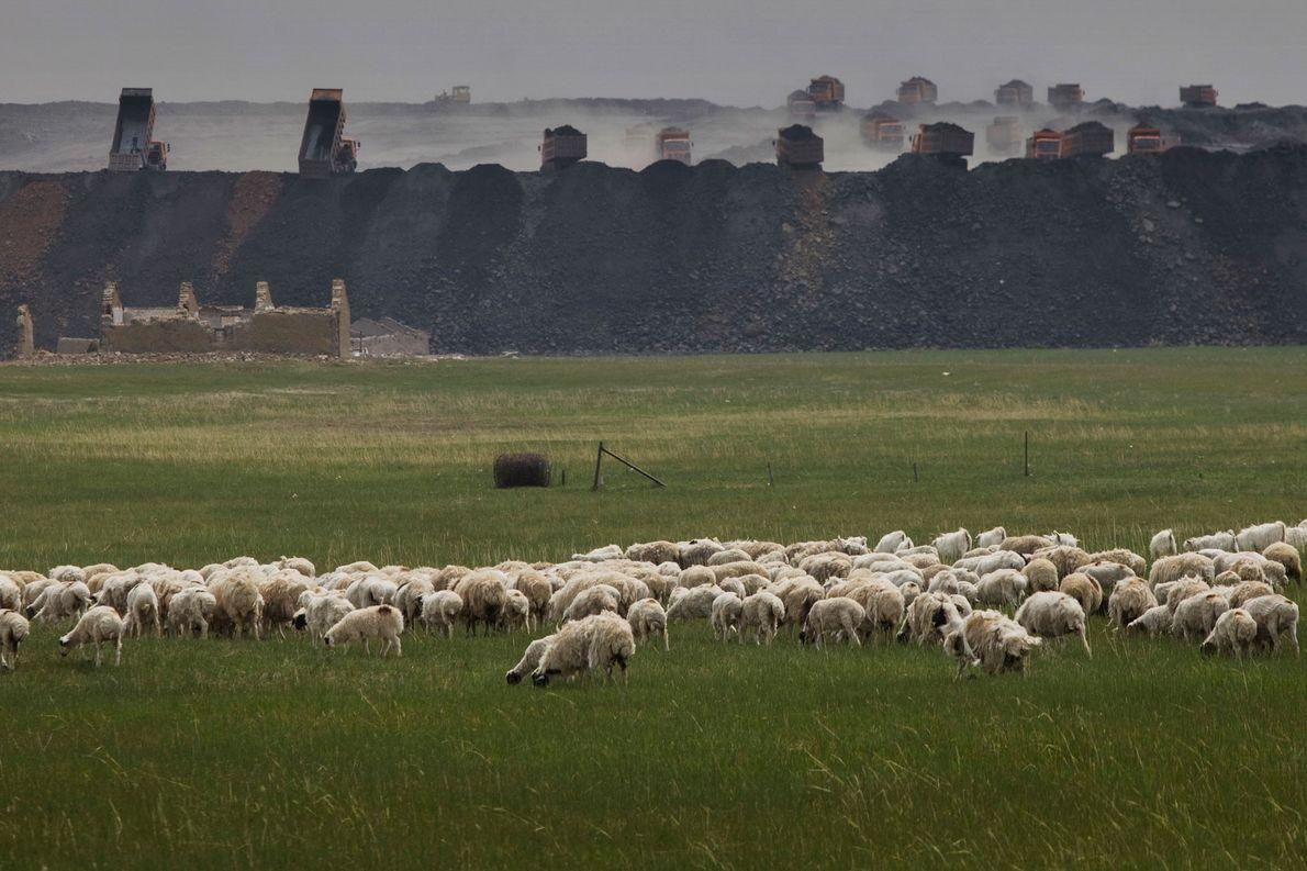 Las ovejas pastan frente a la mina a cielo abierto de Shenhua, que transporta arena y ...