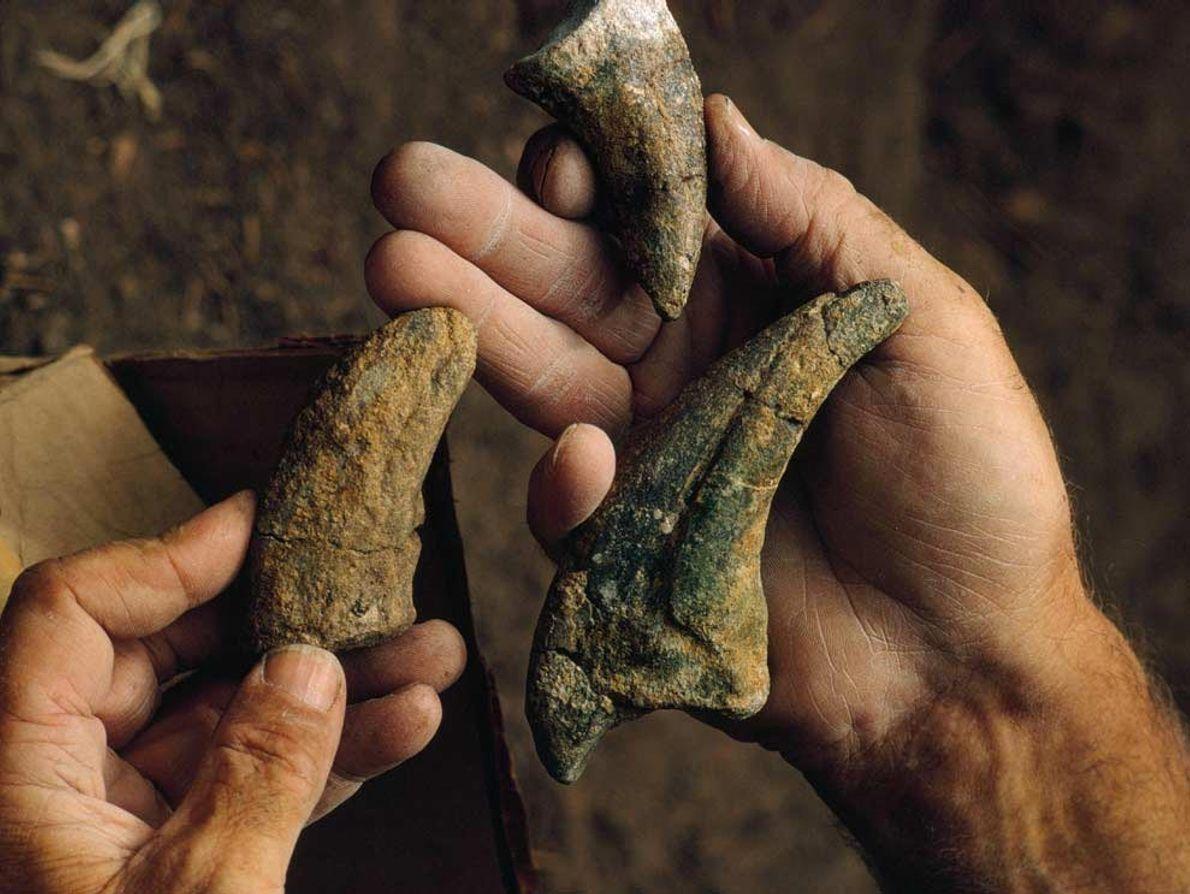 Una excavación en Dry Mesa, Colorado, sacó a la luz estas joyas jurásicas: garras de una ...