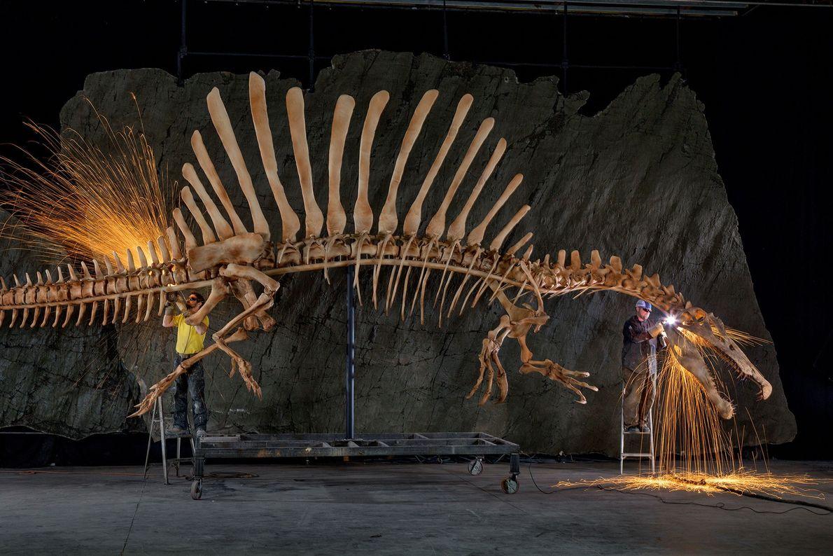 Los trabajadores de la exposición colocan las últimas piezas de una reconstrucción anatómicamente precisa y de ...