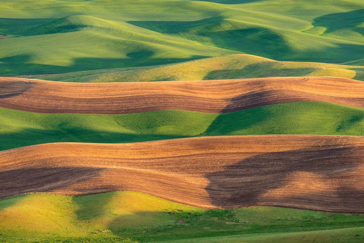 Un suelo rico llamado Palouse loess cubre los campos ondulados del este de Washington en el ...