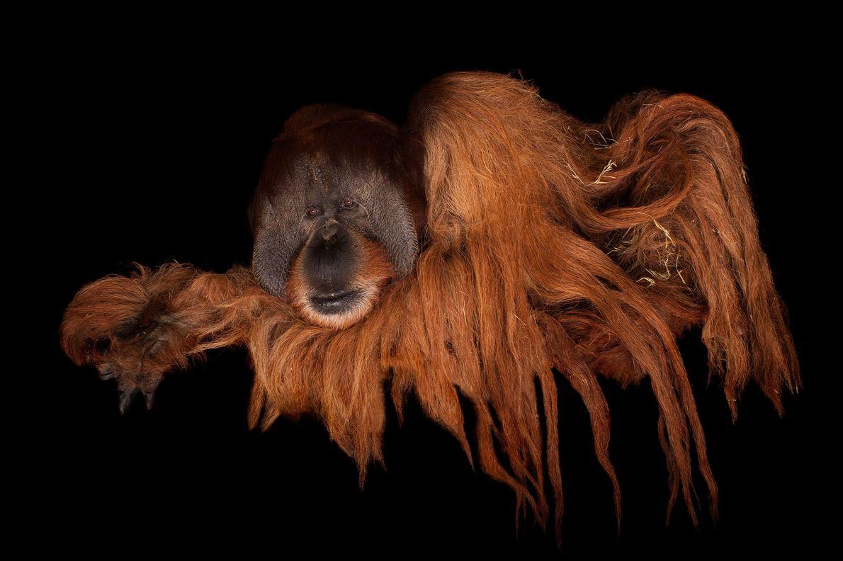 Como parte de su proyecto Photo Ark, el fotógrafo Joel Sartore hizo esta toma de un ...