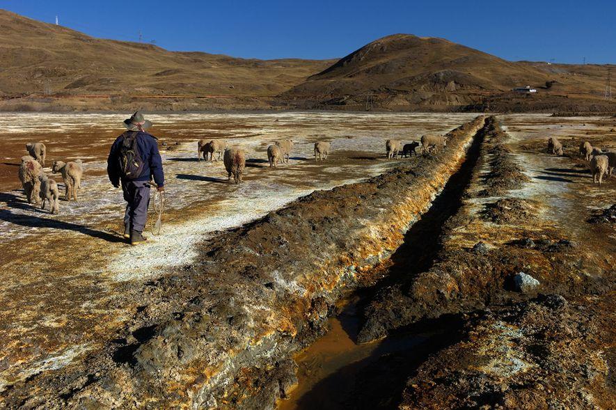 Martin Trinidad Saco, de 70 años, guía a sus ovejas sobre el lecho altamente contaminado de ...