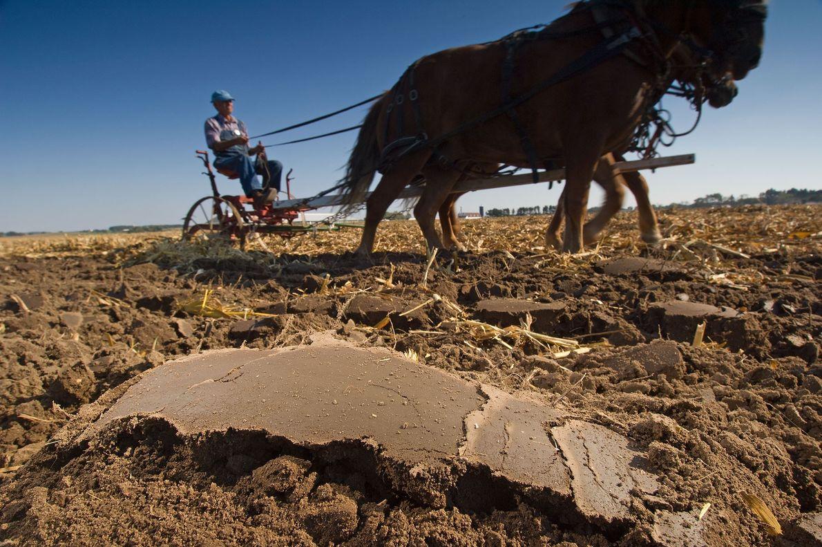 Spencer Yeoman, un agricultor de Davis, Illinois, demuestra el arado de caballos en una conferencia de ...