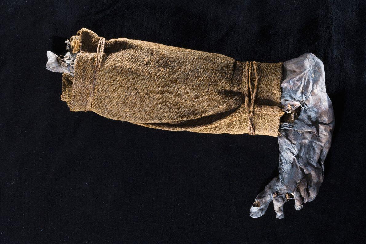 La pierna de una momia de pantano encontrado en 1944. Los agricultores a menudo cortando la ...