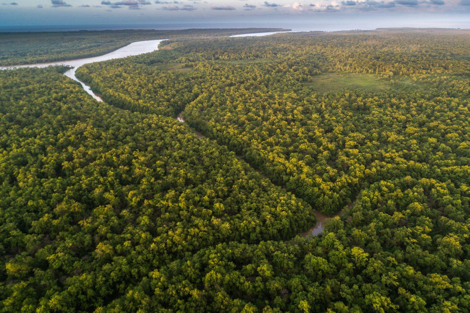 El arroyo Cobra y el canal de Inferno abren caminos en la Estación Ecológica Maracá-Jipioca, en ...