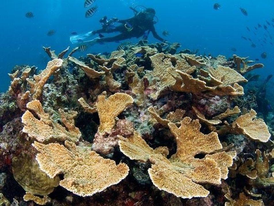 Así sobreviven los corales a la acidificación del océano