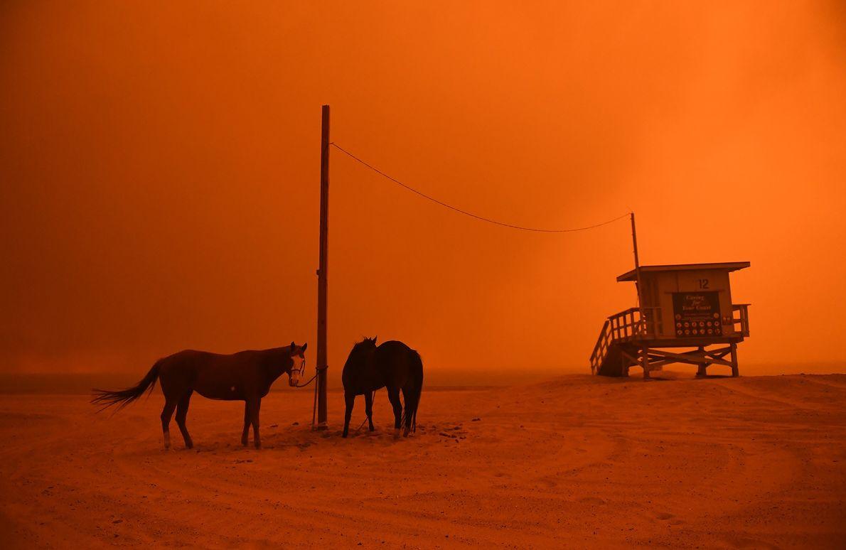 Los caballos están atados a un palo en la playa de Malibú cuando el fuego de ...