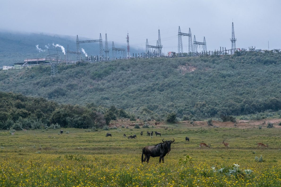 El ñu y la gacela pastan en las llanuras del Santuario de Vida Silvestre de Oserengoni, ...