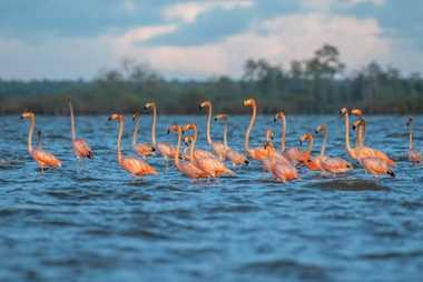 La Amazonía es la región más rica del mundo en aves, que colorean los cielos, las ...