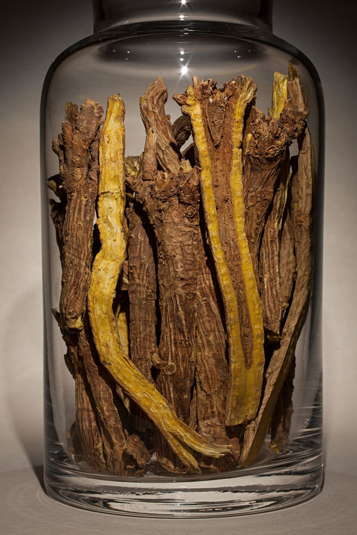 "Nombre común: escutelaria  Latín: ""Scutellaria baicalensis"" Chino: Huang Qin Algunos usos: enfermedades ginecológicas y obstétricas."