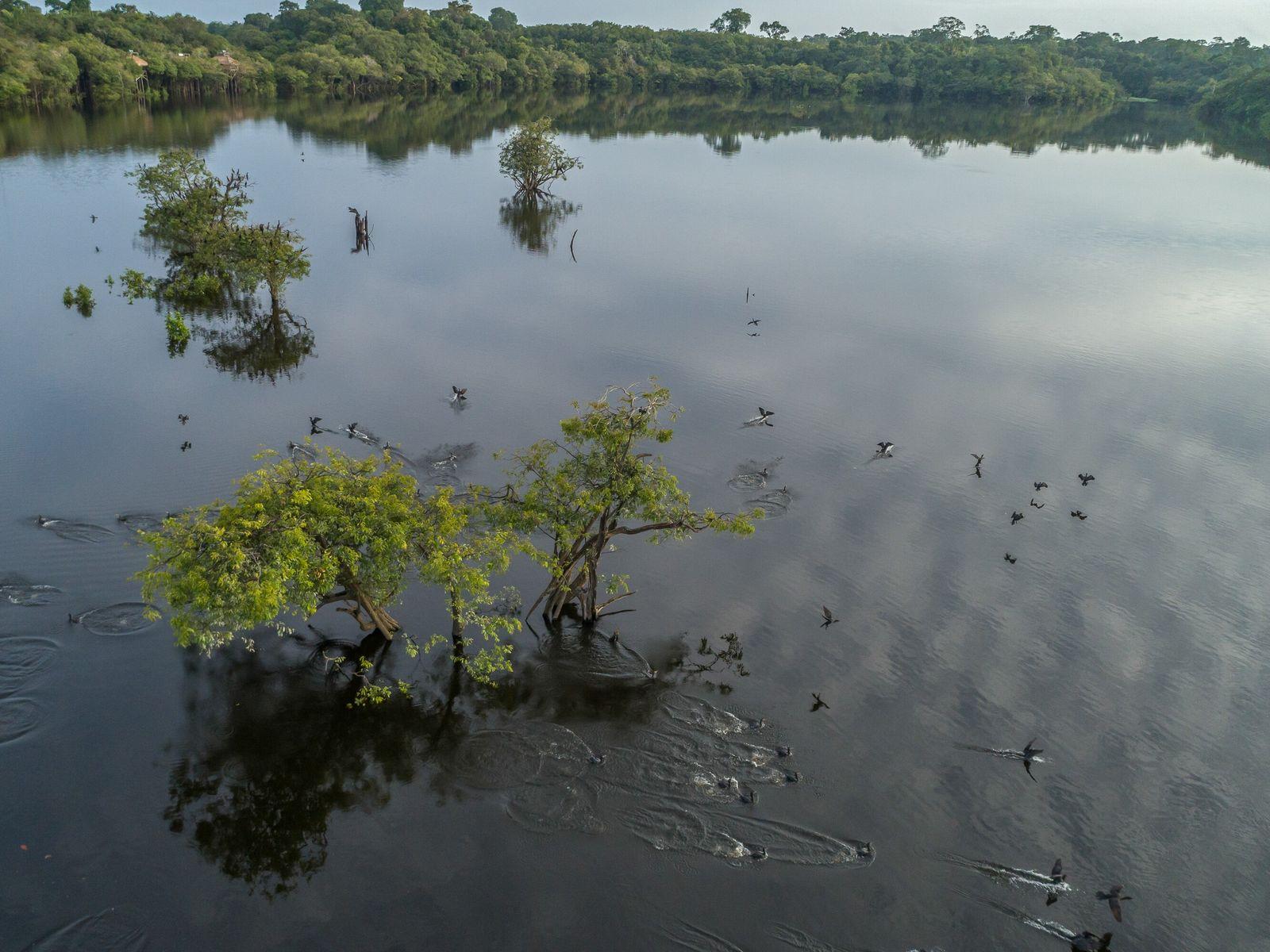 La vegetación del igapó adorna la región del río Juma, en el estado de Amazonas, Brasil. ...