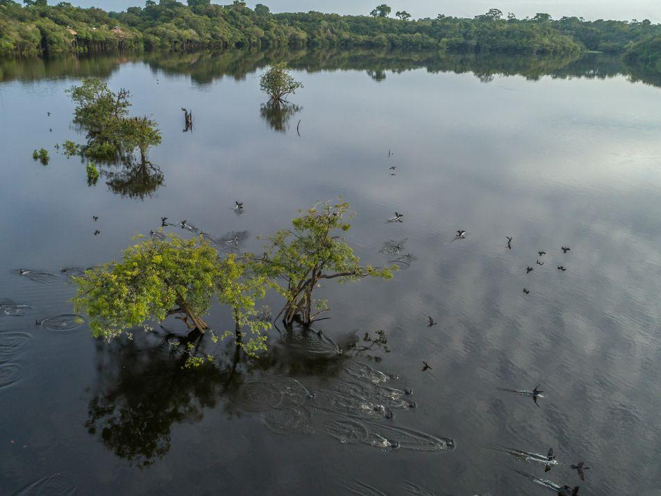 El cambio climático y las actividades humanas amenazan las zonas inundables de la Amazonía