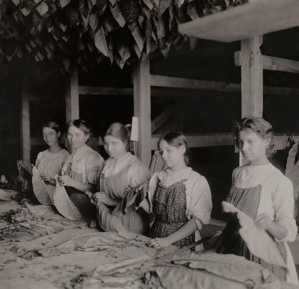 Los trabajadores preparan hojas de tabaco para curar en un granero cubano en 1920.