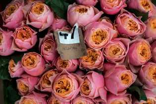 """Oserian también cultiva rosas """"Vuvuzela"""", que llevan el nombre de un instrumento de cuerno de plástico ..."""