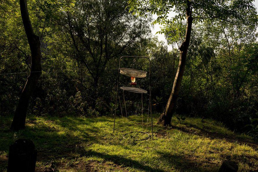 Los investigadores usaron diversas redes para capturar colibríes en La Cantera. Ésta, colocada sobre un comedero, ...
