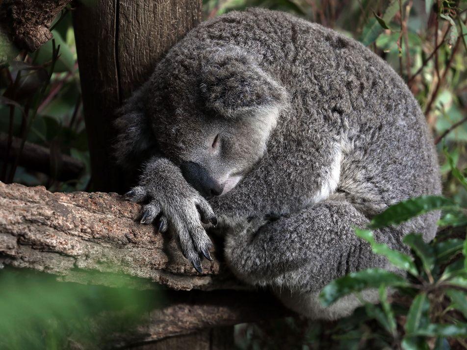 Adorables imágenes de animales durmiendo