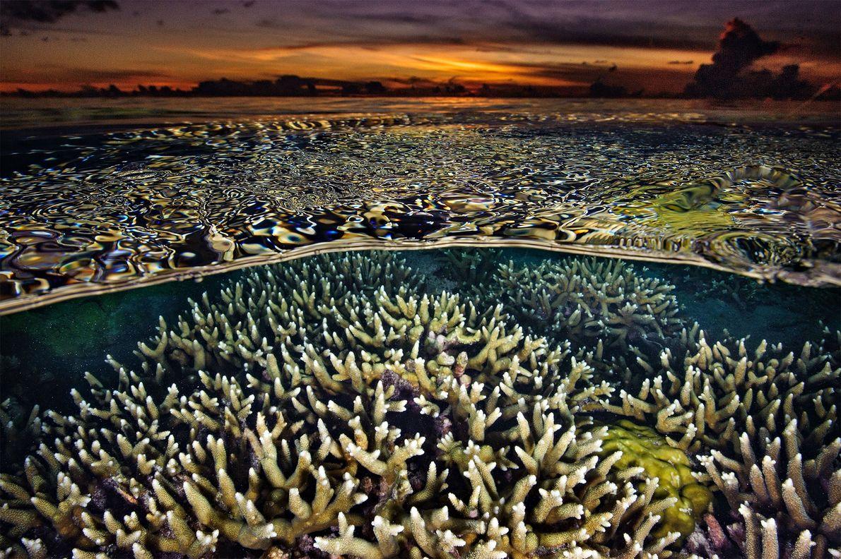 El brillo anaranjado se cierne sobre el agua durante la puesta de sol en Tubbataha. Los ...