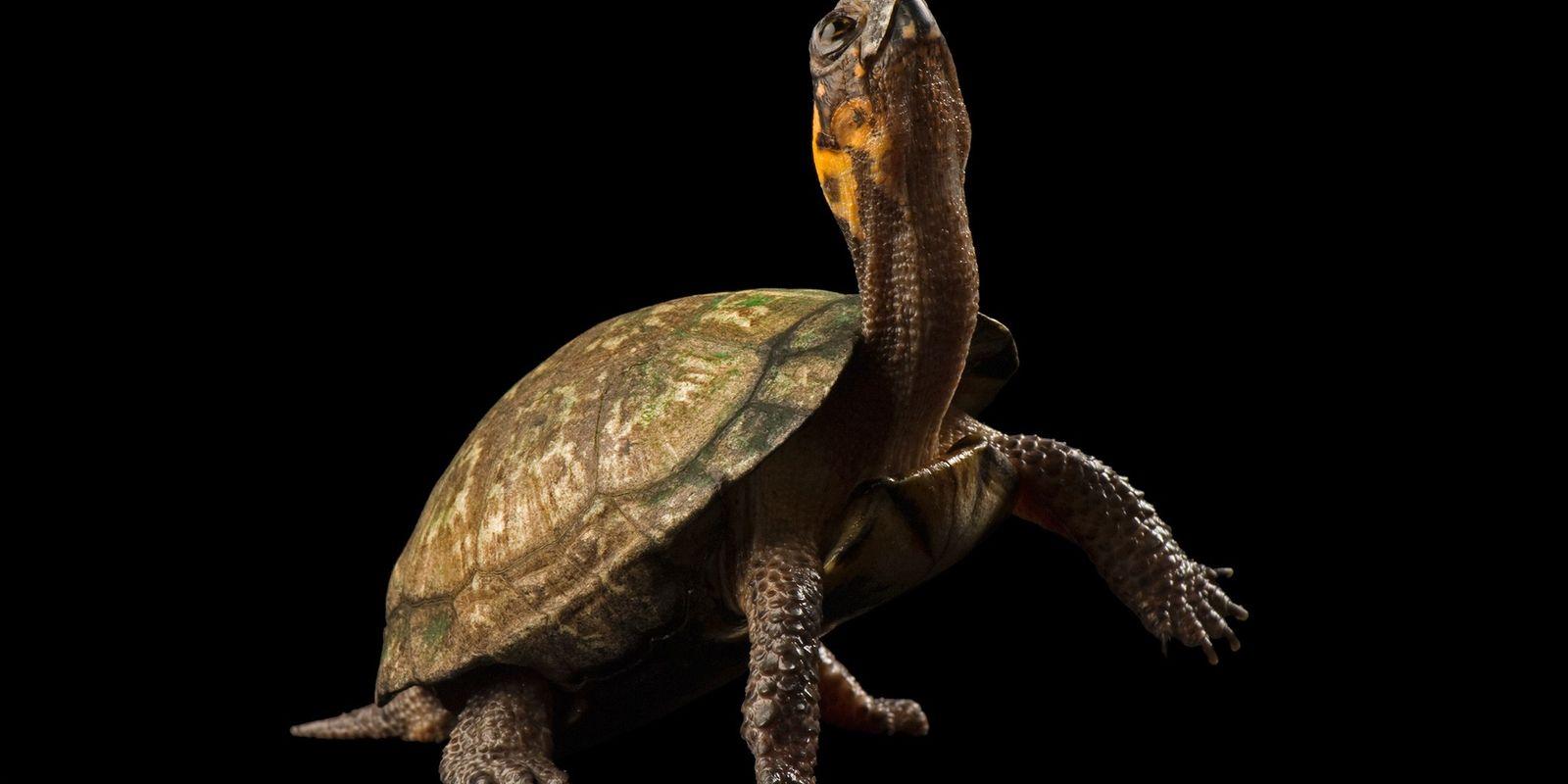 Fotografías de hermosas tortugas