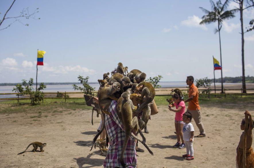 Los monos se amontonan sobre Melissa Moreno, de Bogotá en una visita a la Isla de ...