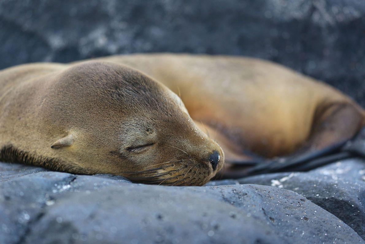 Una adorable foca durmiendo.