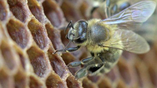 ¿Sabías que los humanos dependen de las abejas desde hace 9.000 años?