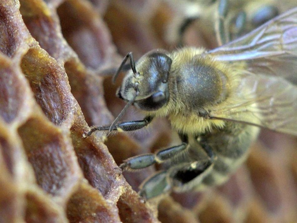 ¿Sabías que hace 9.000 años que los humanos dependen de las abejas?