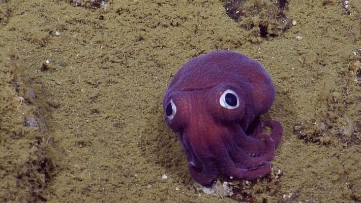 Adorable criatura de  ojos saltones desconcierta a los científicos