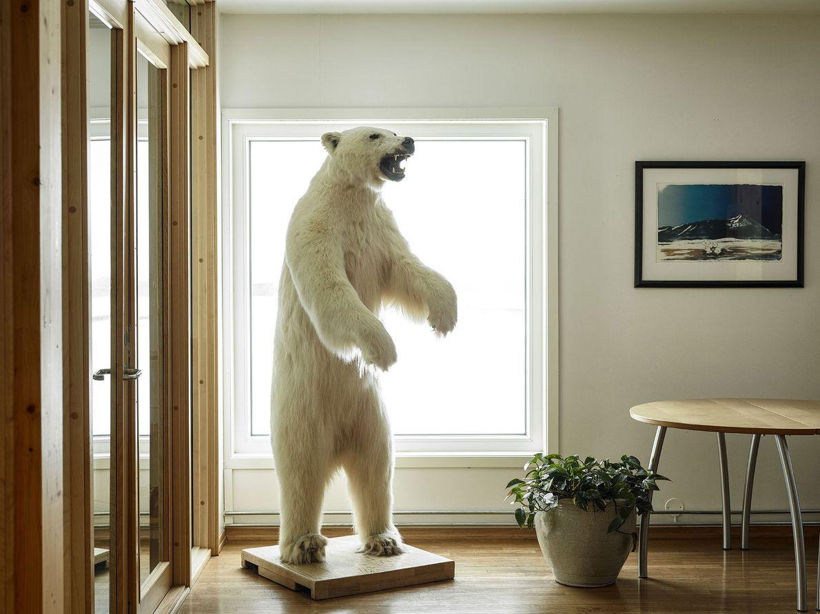 Un oso polar taxidermiado agrega un toque ártico a la entrada del comedor en Ny-Ålesund.