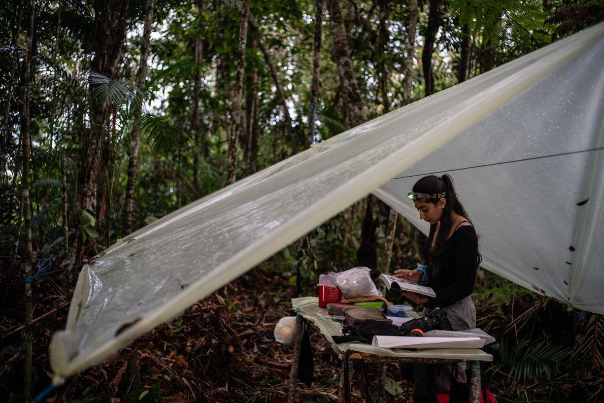 La ornitóloga Maria Isabel Castaño trabaja en una improvisada estación ornitológica en el medio del bosque.