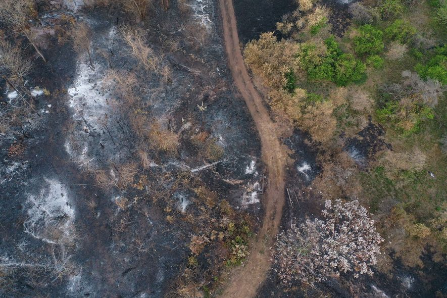Vista aérea de limoneros destruidos en Roboré, una imagen que ilustra la dimensión de los daños.