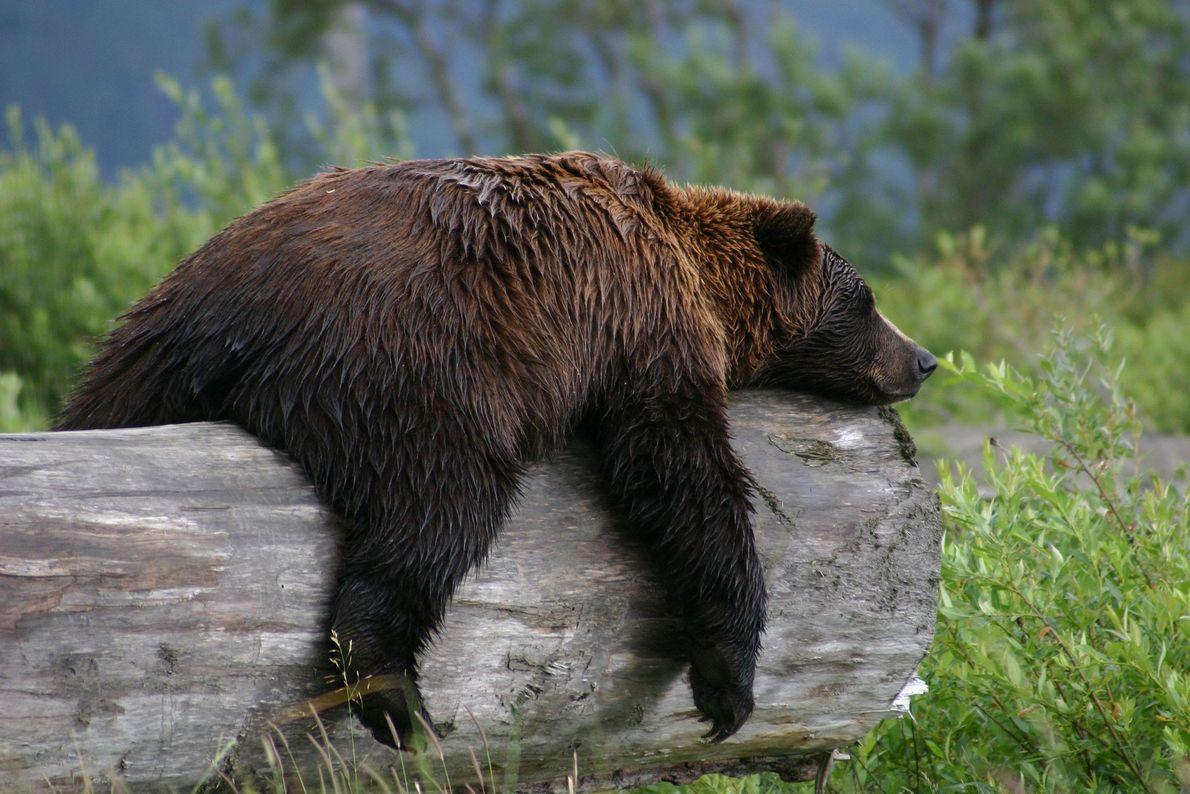 """""""Mientras viajaba por Alaska, me detuve en el refugio de vida silvestre y tuve la oportunidad ..."""