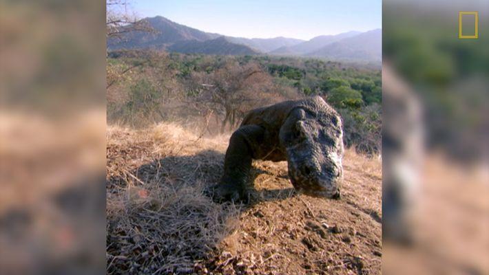 El Dragón de Komodo