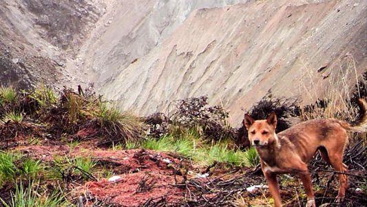 Redescubren a una población de perros salvajes que se creía extinta
