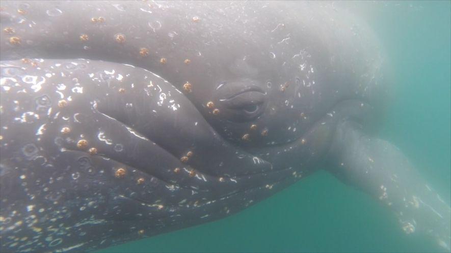 Mira la Antártida desde el lomo de una ballena