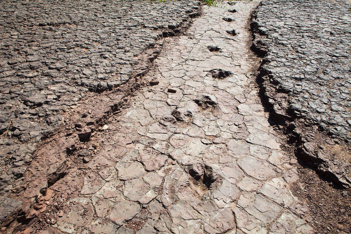 Un conjunto de huellas de dinosaurios cruza el Valle de los dinosaurios en Sousa, noreste de ...