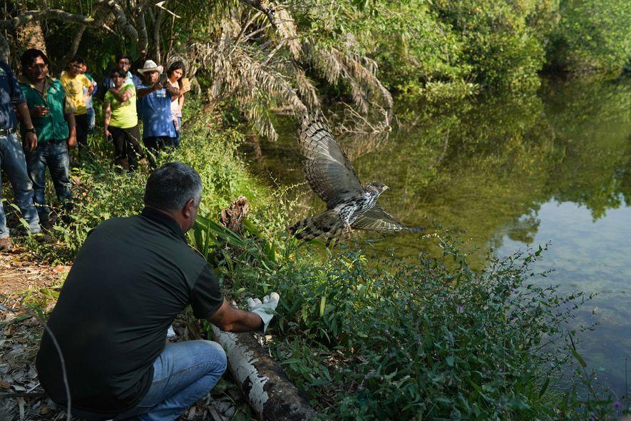 El personal del centro de rescate de Aguas Calientes y funcionarios del gobierno liberan a un ...