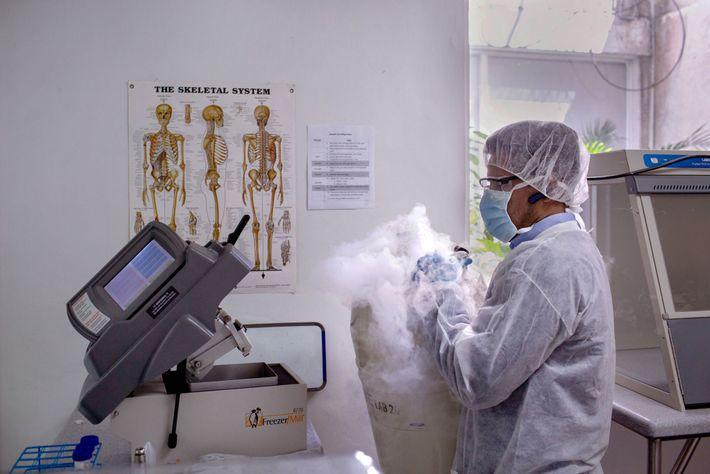 Para extraer el ADN de un hueso, un científico echa nitrógeno líquido en una máquina para ...