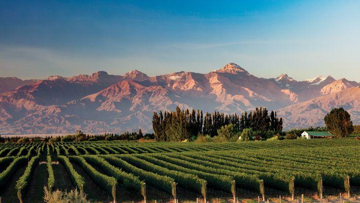 Los Andes forman un telón de fondo en el Valle de Uco, Mendoza, donde se produce ...
